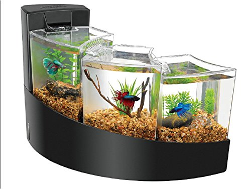 62_1aquarium_tropicalfish_fishtank